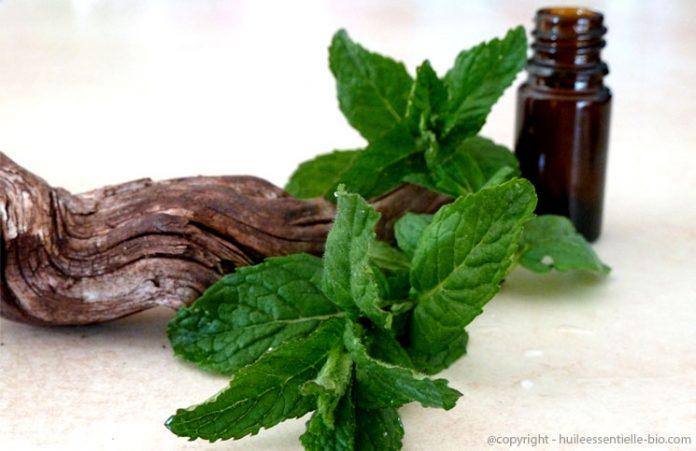 huile esentielle menthe poivrée