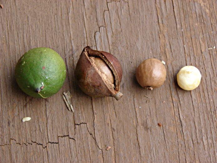 Huile végétale de Macadamia
