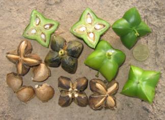 Huile végétale d'Inca Inchi